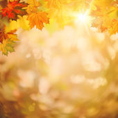 Abstract autumnal backgrounds — Stock Photo