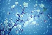 Снег и цветы. — Стоковое фото