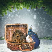 Abstract winter and Xmas backgrounds with funny animals — Stok fotoğraf