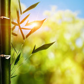 Bamboo grass against abstract natural backgrounds — Stock Photo