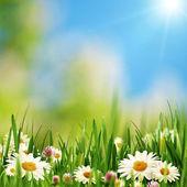 Beauty daisy flowers on the summer meadow — Stock Photo