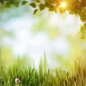 Las, streszczenie tło naturalne — Zdjęcie stockowe