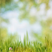 Green grass on the noon, abstract natural backgrounds  — Stock Photo