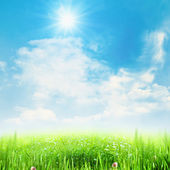 Beauty summer meadow under blue skies — Stock Photo