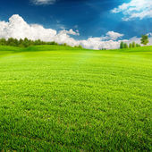 Summer time,  environmental backgrounds — Stock Photo