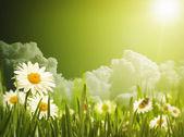 Bright summer background — Stock Photo