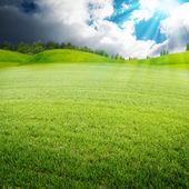 Mattina d'estate sul prato — Foto Stock