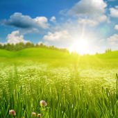 Summer morning on the meadow — Stock Photo