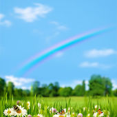 Pasture rural landscape with beauty flowers — Stock Photo