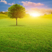 Early morning on the green summer meadow — Stock Photo