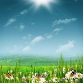 Alpine pastoral landscape with beauty daisy flowers — Stock Photo