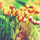 Grungy floral backgrounds. — Stock Photo