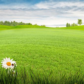Beauty summer day on the meadow — Stock Photo