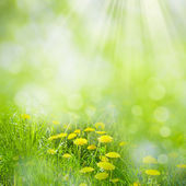 Summer day on the meadow — Stock Photo