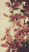 Oriental grungy floral backgrounds — Stock Photo