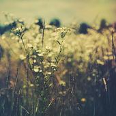 Vilda blommor på ängen. — Stockfoto