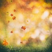 October rain background — Stock Photo