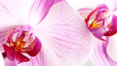 Orchids background — Stock Photo