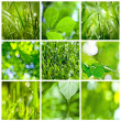 Collection of green grass and leaves — Stock Photo