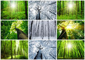 Forest — Stock fotografie