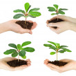 Plants in hands — Stock Photo