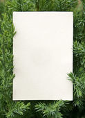 Card with fresh green fir branches — Stock Photo