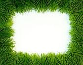 Frisches grün — Stockfoto