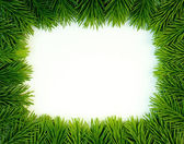 Verde fresco — Foto de Stock