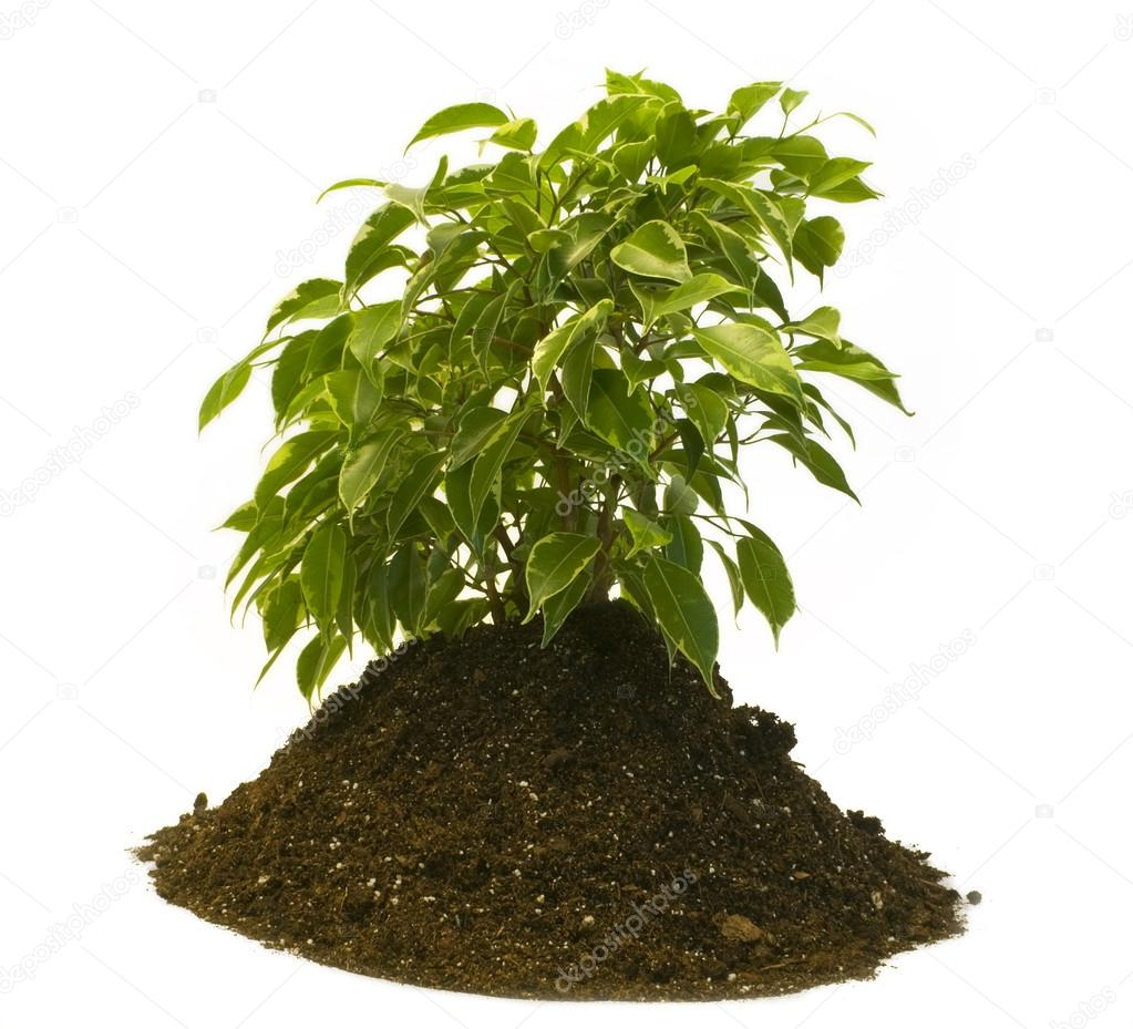 Plant growing from ground — Stock Photo #13587141