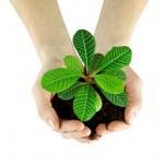 Plant — Stock Photo #13876610