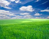 Agriculture — Stock fotografie