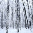 Forest trees. nature snow wood background - Stock Photo