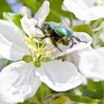Beetle — Stock Photo #14766661