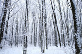 Forest trees. nature snow wood background — Foto Stock