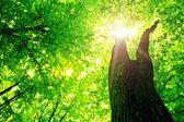 Orman ağaçları — Stok fotoğraf