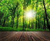 Dřevo texturou — Stock fotografie
