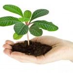 Plant — Stock Photo #15872949