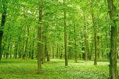 Forest — ストック写真