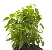 Planta — Fotografia Stock