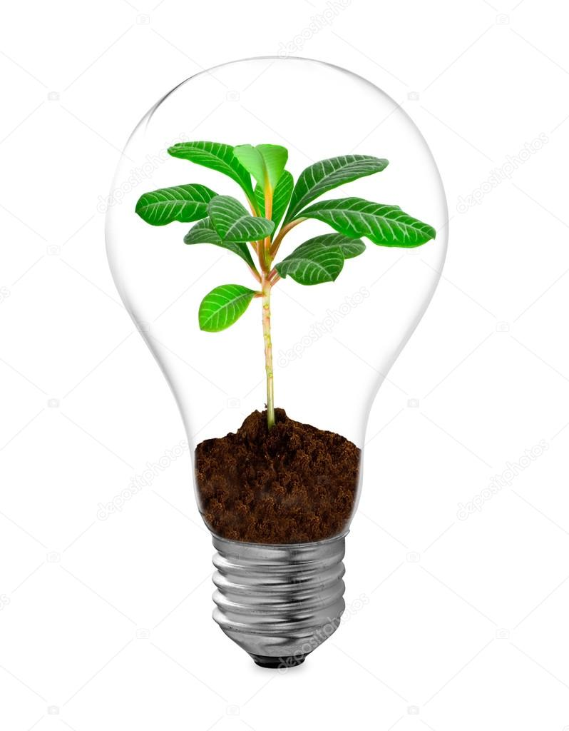 Bulb on a white background — Stock Photo #15872955