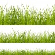 Grass — Stock Photo #18891691