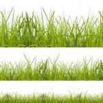 Grass — Stock Photo #18891691