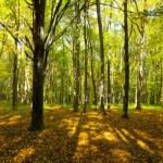 Autumn forest — Stock Photo #18891721