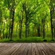 Stock Photo: Forest trees.