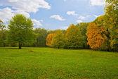 Bellissima vista del parco bosco e ruscello di montagna. legno — Foto Stock