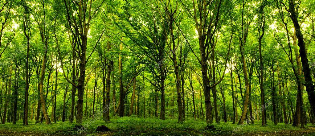Фотообои Лесные деревья.
