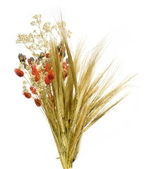 Composition from flower and ears of wheat — Stock Photo