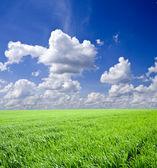 草原 — ストック写真