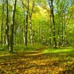 Autumn forest — Stock Photo #22274341