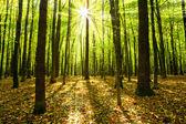φθινόπωρο δάσος — Φωτογραφία Αρχείου